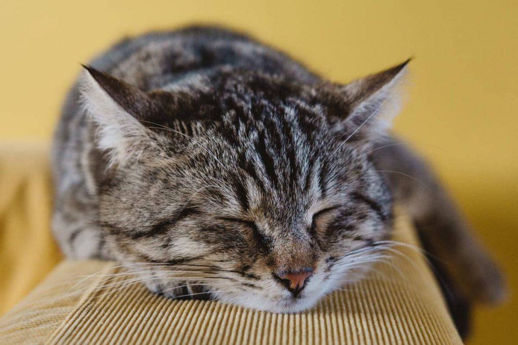 Άρρωστη Γάτα