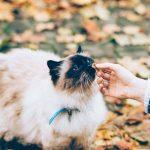 Καλύτερη ξηρά τροφή για γάτες: ποια είναι;