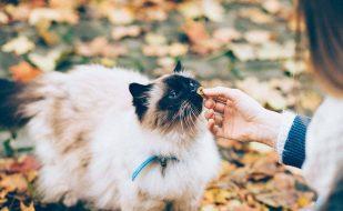 καλύτερη ξηρά τροφή για γάτες pet shop ηλιούπολη teachers pet