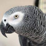 Παπαγάλοι που μιλάνε: μάθετε ποιοι είναι