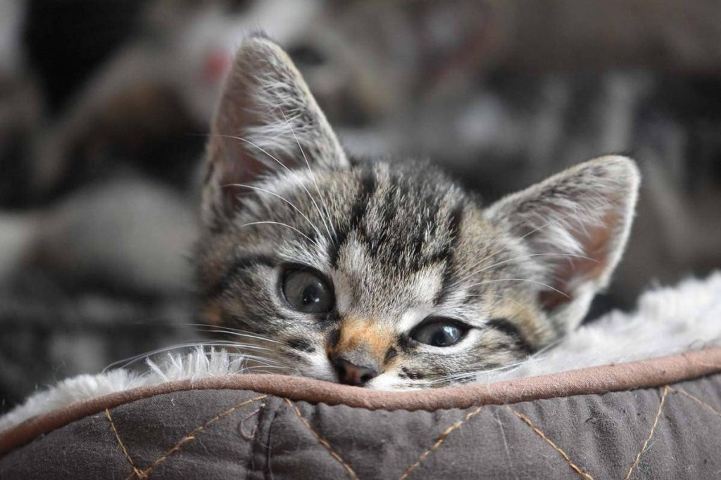 νέο γατάκι στο σπίτι