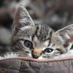 Νέο γατάκι στο σπίτι: λίστα με τα απαραίτητα