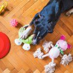 Παιχνίδια Σκύλου: ποιο να διαλέξω;