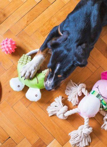 παιχνίδια σκύλου