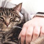 Γιατί οι γάτες κοιμούνται πάνω μας – by Tsitsos the Cat