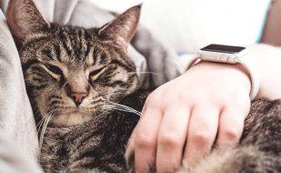 γιατί οι γάτες κοιμούνται πάνω μας